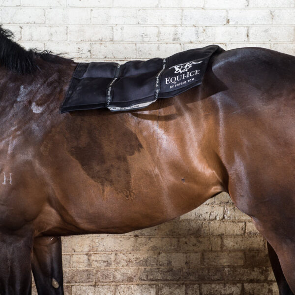 Equi-Ice Cold Pack On Horse's Back