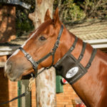 Equi-Ice Horse Neck Pack On Horse