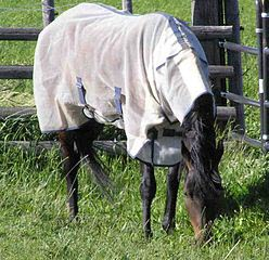 cooling-blankets-for-horses