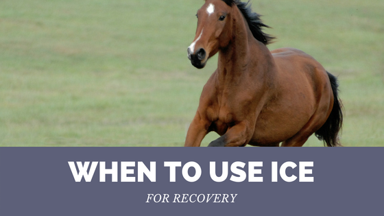 Horse with text when to use Ice for recovery