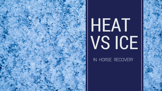 heat vs Ice in horse recovery