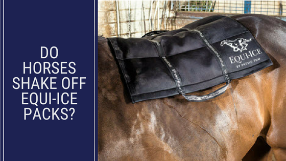 Does The Horse Shake Off Equi-Ice Packs? - Equi-Ice